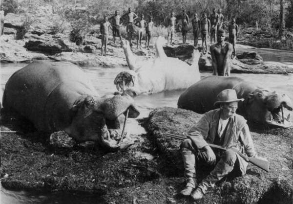 Hippopotamus hunt on Mlembo River, Rhodesia, Africa c. 1910 (Library of Congress)