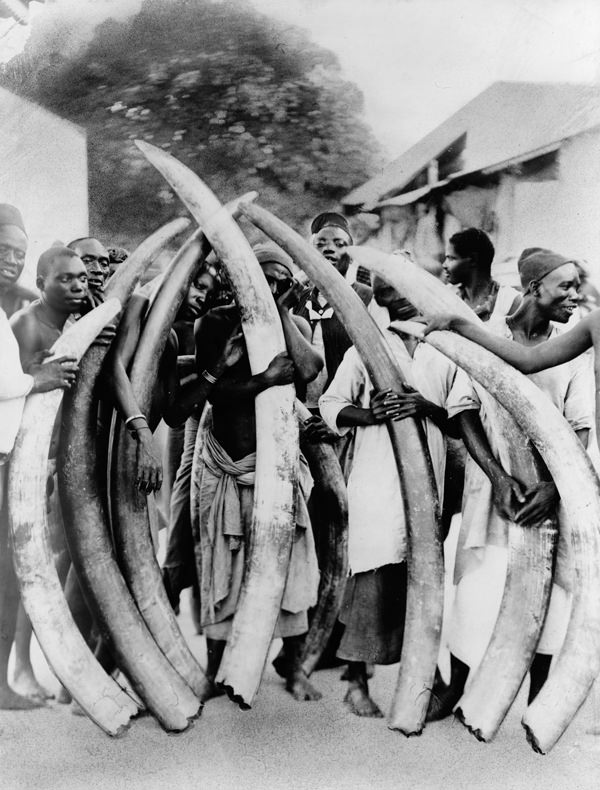 Men with Ivory tusks, Dar Es Salaam (Library of Congress)