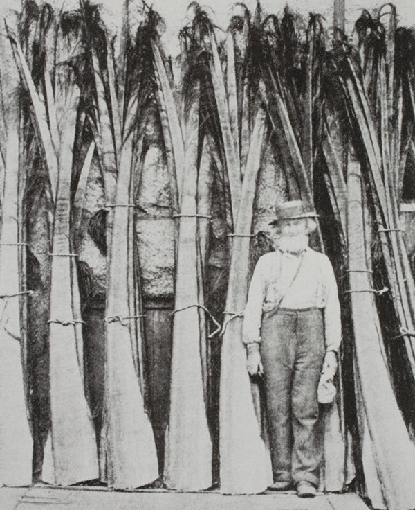 New Bedford dock hand with sheaves of baleen from arctic bowhead whales. (A.B.C. Whipple, The Whalers, 1979)